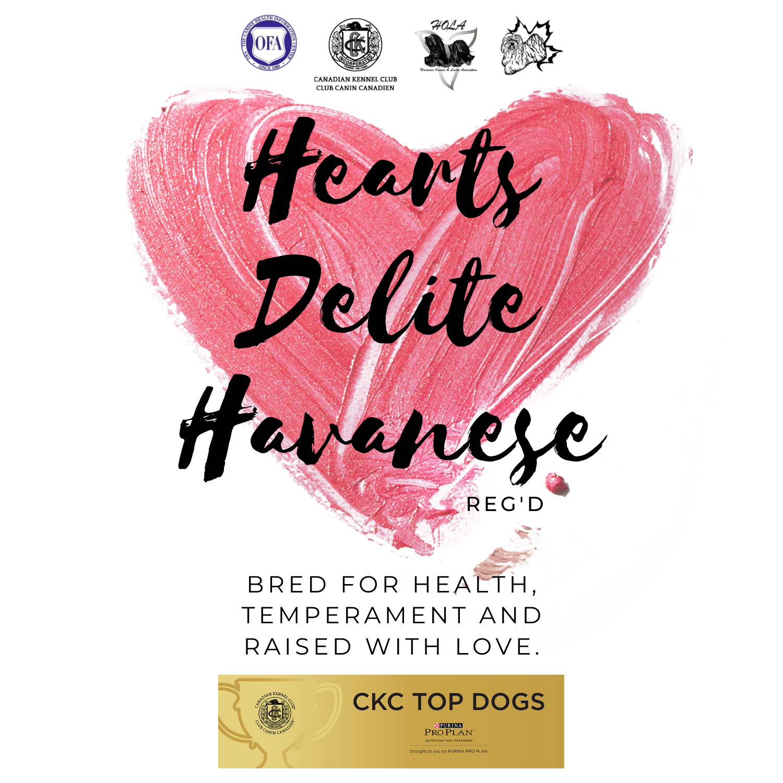 Hearts Delite Havanese